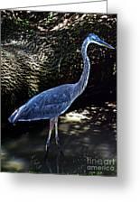 Blue Heron 8 Greeting Card
