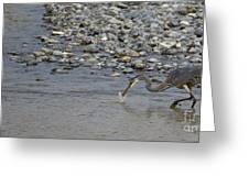 Blue Heron And Fish   #9619 Greeting Card