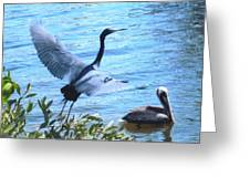 Blue Heron And Pelican Greeting Card