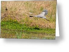 Blue Heron And The Black Bird Greeting Card