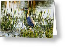 Blue Heron Backside Greeting Card