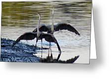 Great Blue Heron Ballet Greeting Card