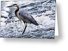 Blue Heron Fishing V3 Greeting Card