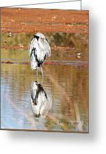 Blue Heron Grooming Greeting Card