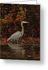Blue Heron In The Fall Greeting Card
