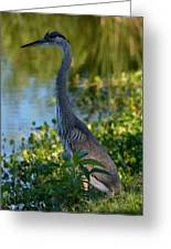 Blue Heron In The White Light Greeting Card