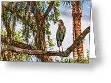 Blue Heron In Tree Greeting Card