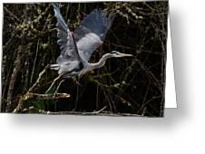Blue Heron Lift Off Greeting Card