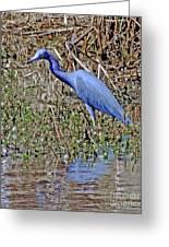 Blue Heron Louisiana Greeting Card