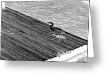 Blue Heron On Dock - Grayscale Greeting Card