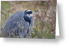 Blue Heron Reflecting Greeting Card