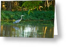 Blue Heron Reflection Greeting Card