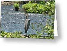 Blue Heron River Fishing  Greeting Card