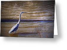 Blue Heron - Shallow Water Greeting Card
