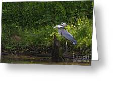 Blue Heron With A Fish-signed Greeting Card