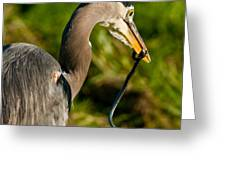 Blue Heron With A Snake In Its Bill Greeting Card