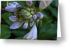 Blue Hosta Greeting Card