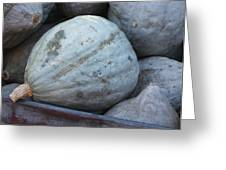 Blue Hubbard Squash Greeting Card
