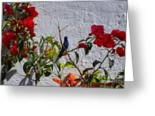 Blue Hummingbird Greeting Card