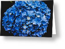 Blue Hydrangea 1 Greeting Card