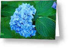 Blue Hydrangea Flower Art Prints Nature Floral Greeting Card