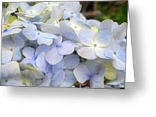 Blue Hydrangea Flowers Greeting Card