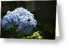 Blue Hydrangea With Bumblebee Greeting Card