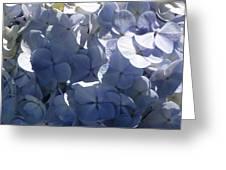 Blue Hydrangeas Greeting Card