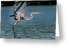 Blue In Flight Greeting Card