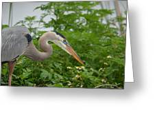 Blue In The Greens  Greeting Card
