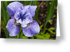 Blue Iris Flower Raindrops Garden Virginia Greeting Card