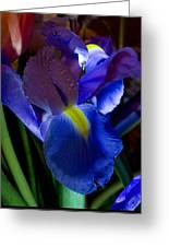 Blue Iris Greeting Card by Joann Vitali