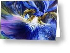 Blue Iris Greeting Card by Lynette Yencho