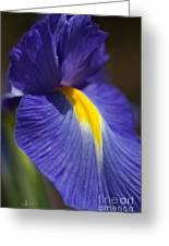 Blue Iris With Yellow Greeting Card