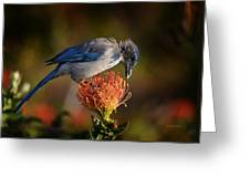 Blue Jay 1 Greeting Card