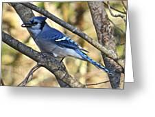 Blue Jay 112 Greeting Card