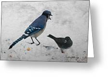 Blue Jay And Junco Greeting Card