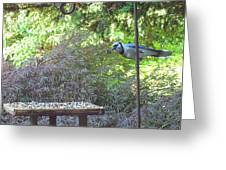 Blue Jay At Lunch Greeting Card