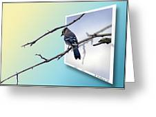 Blue Jay Branch Greeting Card