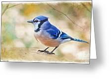 Blue Jay - Digtial Paint Greeting Card