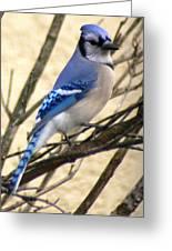 Blue Jay In A Bush Greeting Card