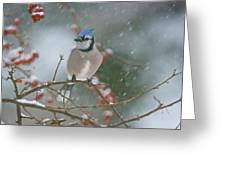 Blue Jay In Snow Greeting Card