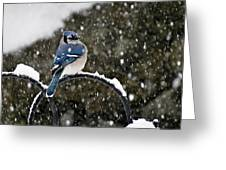 Blue Jay In Snow Storm Greeting Card