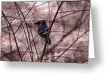 Blue Jay In The Willow Greeting Card