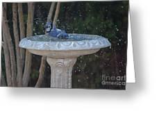 Blue Jay Loves To Splash Water Greeting Card
