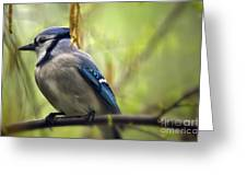 Blue Jay On A Misty Spring Day Greeting Card