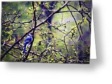 Blue Jay - Paint Effect Greeting Card