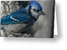 Blue Jay Painterly Greeting Card