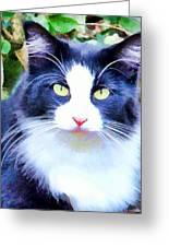 Blue Kitty Greeting Card