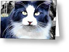 Blue Kitty Two Greeting Card